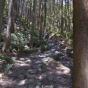 Street view of Tsudzurato Pass(Kumano Kodō) of the world heritage